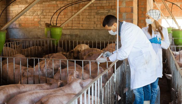 essais vétérinaires